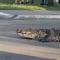 Crocodilo no México