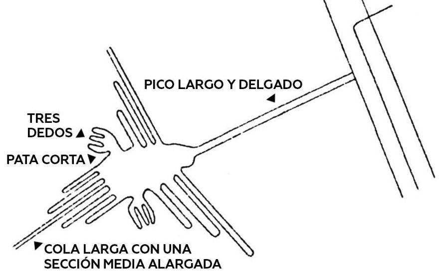 Geoglifo das linhas de Nazca