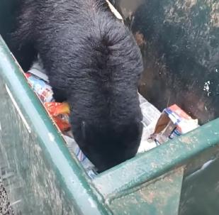 Urso assustado pula de cabeça para baixo em busca de gostosura
