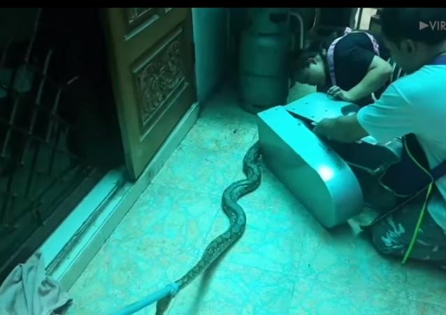 Píton enorme fica enroscado em batedeira industrial na Tailândia