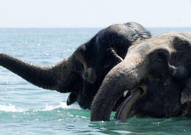 Elefantes (imagem ilustrativa)