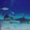 Duelo de tubarões