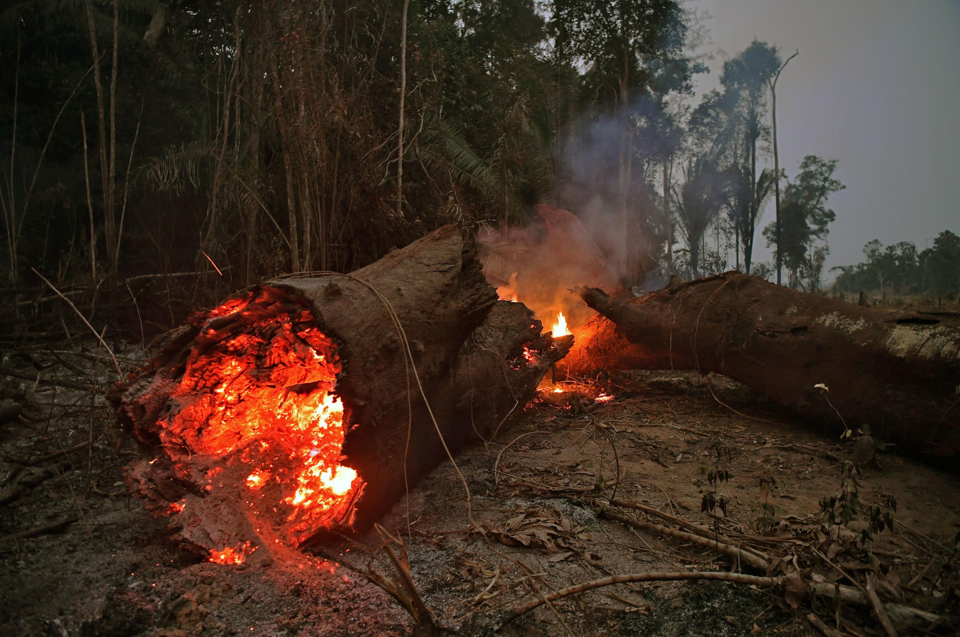 Tronco pega fogo na Floresta Amazônica