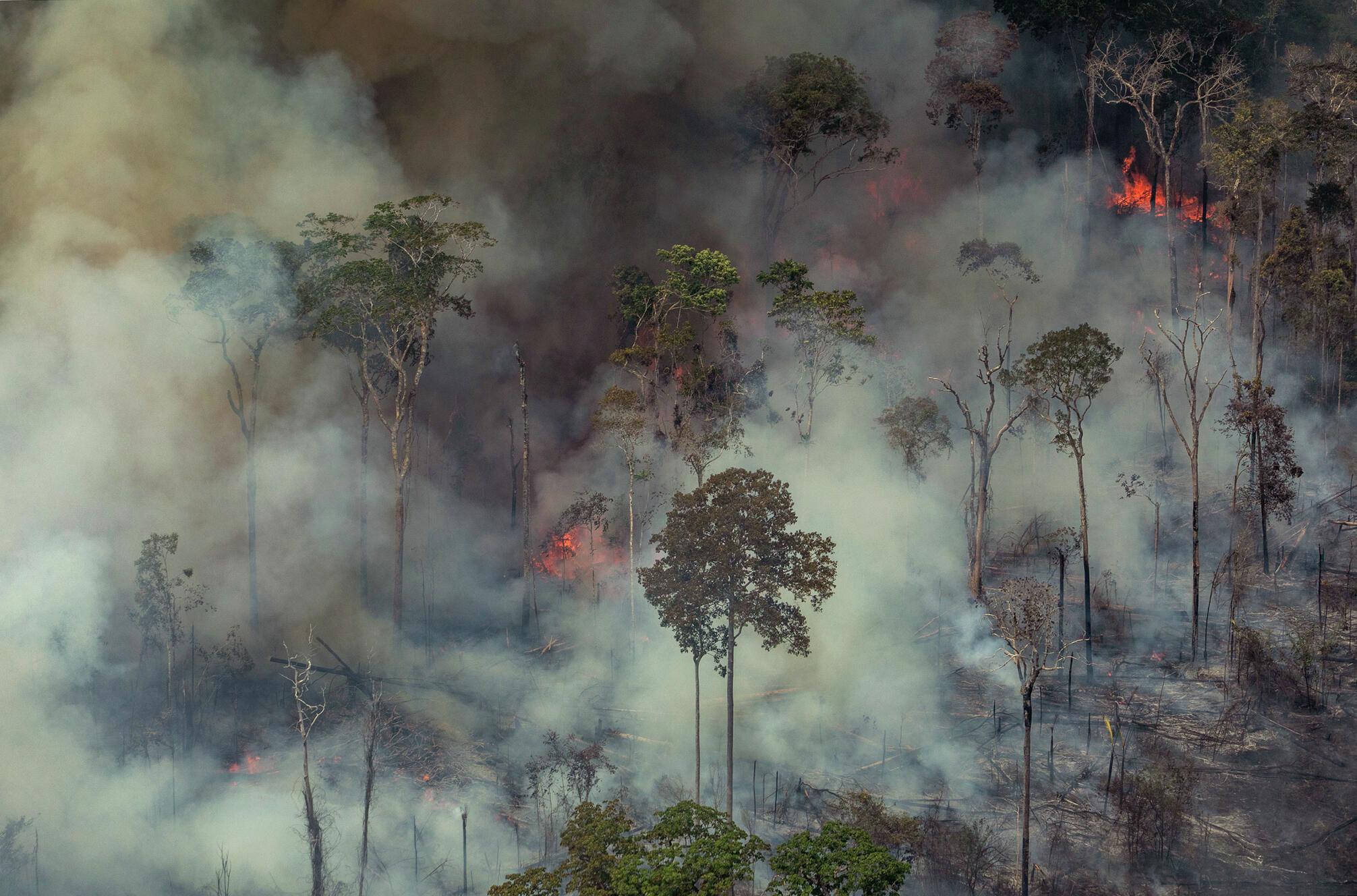 Incêndios florestais no Brasil