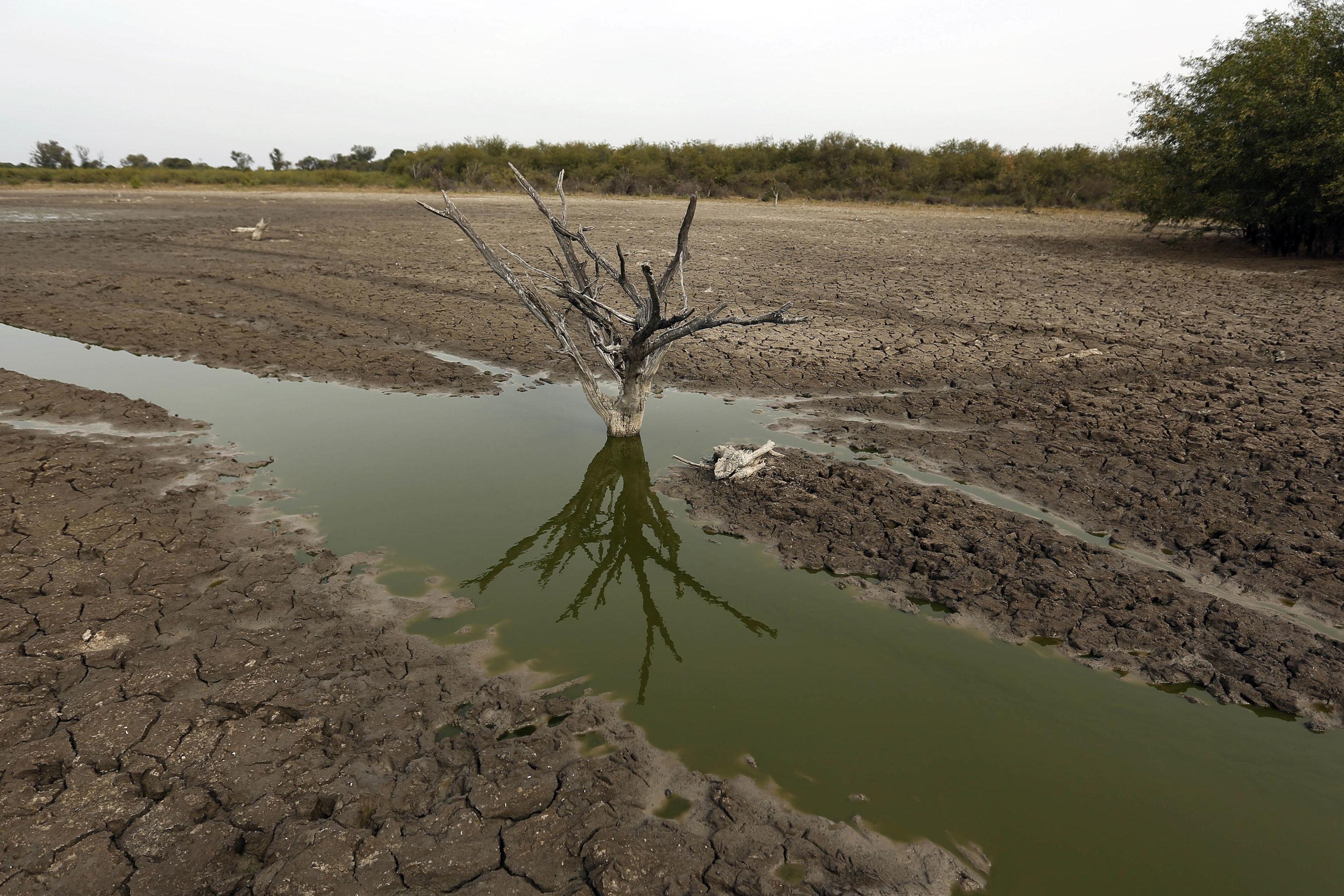 Tronco de árvore dentro do que resta do rio Pilcomayo, na região florestal conhecida como Chaco, no Paraguai, 25 de junho de 2016