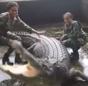 Crocodilo tenta abocanhar garotas