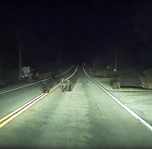 Família de Ursos é salva por carro autônomo da Tesla