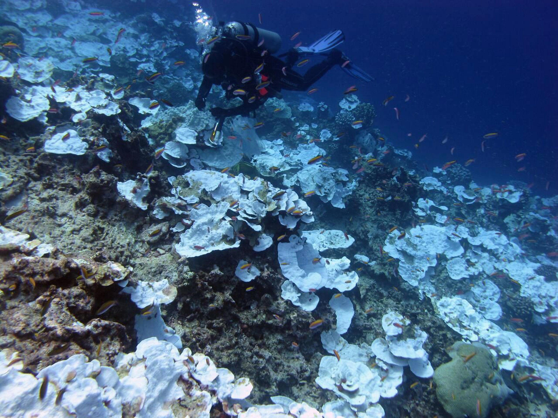 Mergulhador nas águas do oceano Pacífico olhando para corais (imagem referencial)