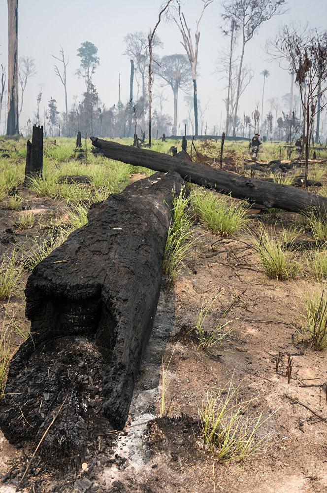 Árvares queimadas encontradas por agentes do Ibama durante operação de fiscalização na Floresta Nacional do Jamanxim, no Pará