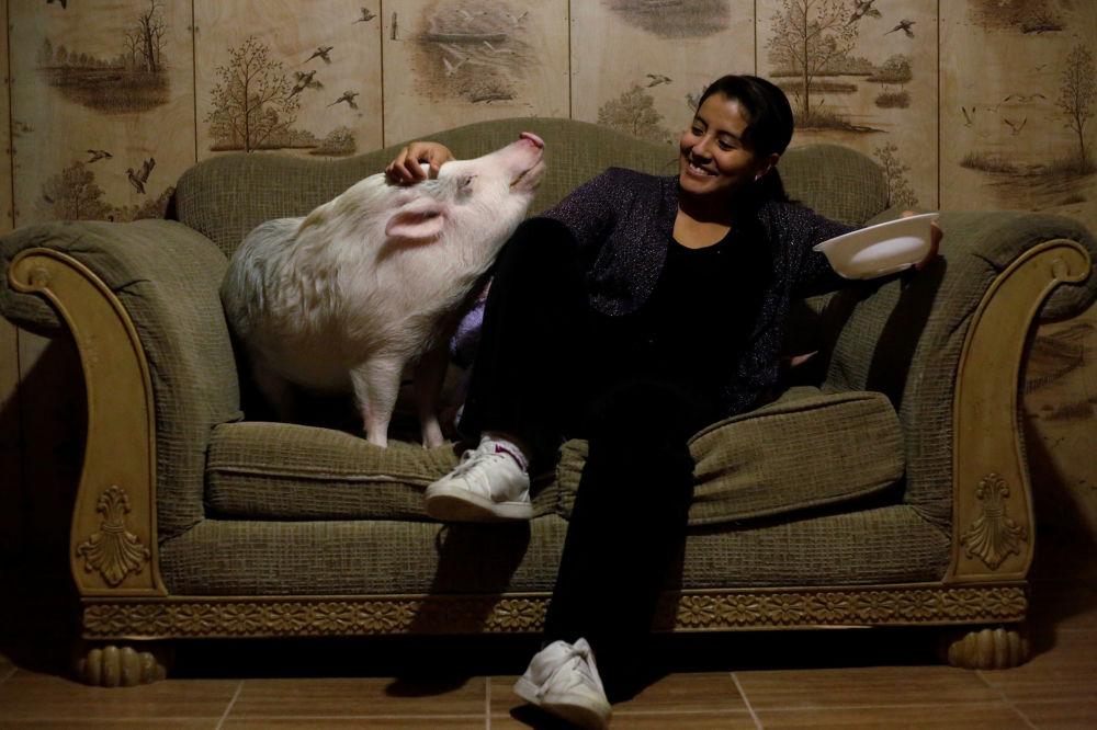 Yissel Mendoza com porco Balu na sua casa em Ciudad Juárez, no México