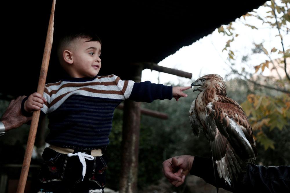 Pequeno palestino brinca com falcão na Cisjordânia