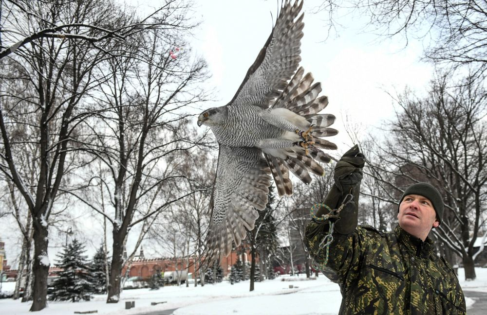 Funcionários do serviço ornitológico do Kremlin com um falcão