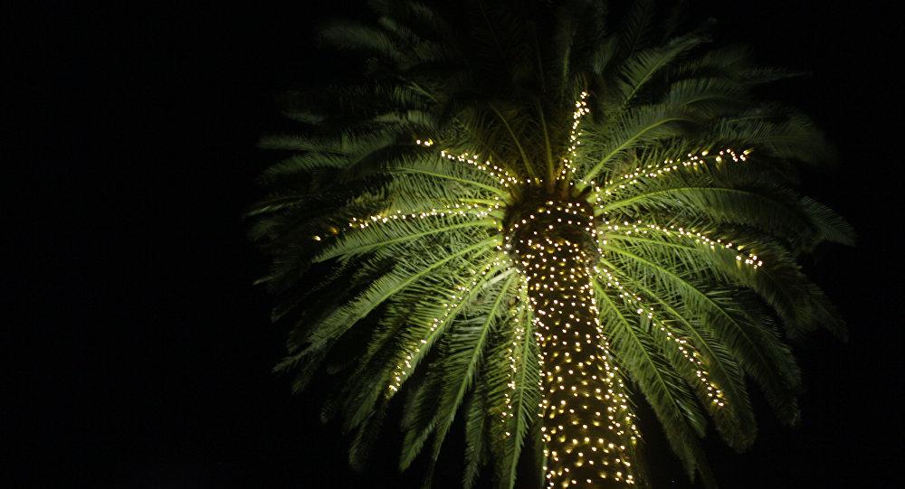 Palmeira iluminada
