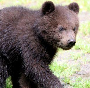 Urso-negro invadiu casa nos EUA para brincar