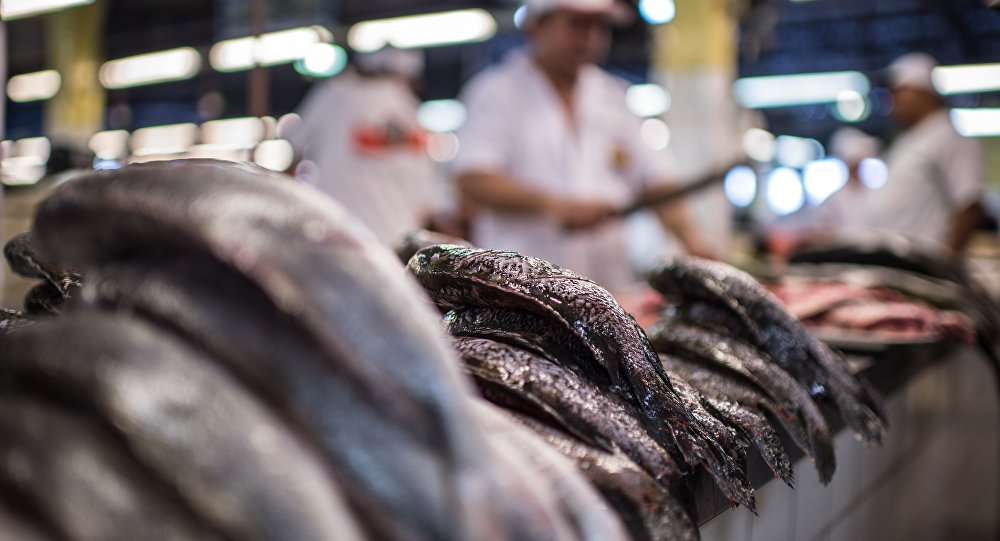 Indústria da pesca gera 4 mil empregos e fatura US$ 62 milhões por ano