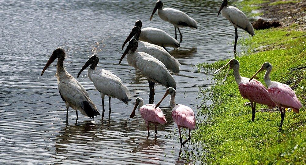 Aves em um lago