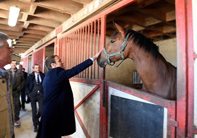 Macron acaricia cavalo em abril de 2017