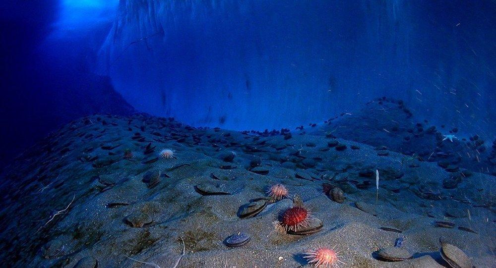 Muro de gelo no fundo marítimo