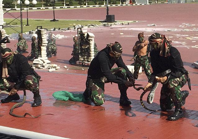 Forças especiais indonésias mostram ao chefe do Pentágono como manipular serpentes, em 24 de janeiro de 2018