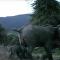 Amor materno leva elefante a enfrentar rei dos animais
