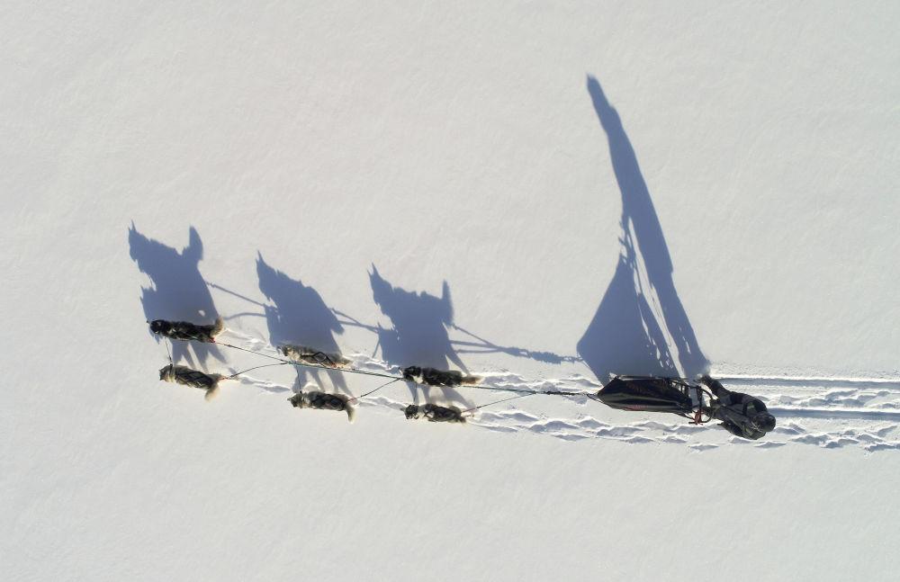 Corrida de trenó na Sibéria, Rússia