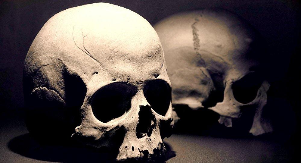 Resultado de imagem para cranios