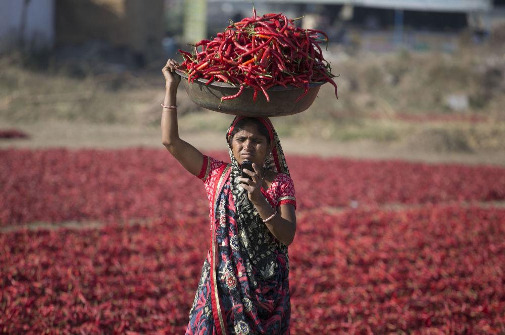 Mulher indiana olha no celular durante apanha da pimenta vermelha