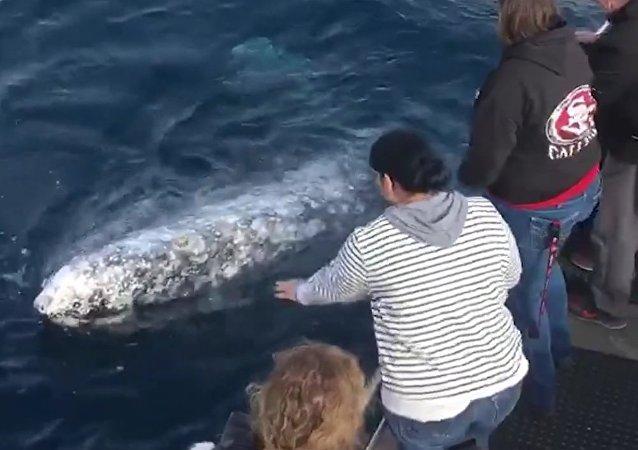Turistas arriscam vida e liberdade para tirar selfie com baleia