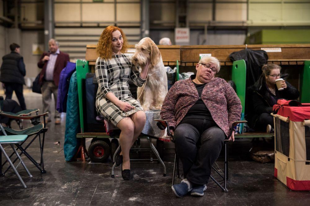 Exposição de cachorros Crufts Dog Show em Birmingham, Reino Unido