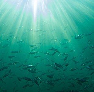 Peixes debaixo de água, imagem ilustrativa