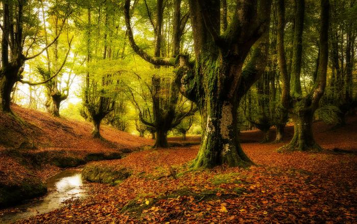 Floresta Otzarreta está localizada no País Basco, Espanha. Na floresta Otzarreta ficam as árvores com galhos mais surreais do mundo