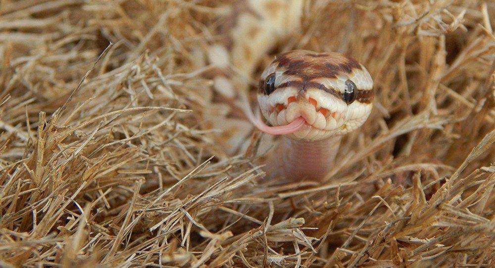Uma serpente (imagem referencial)