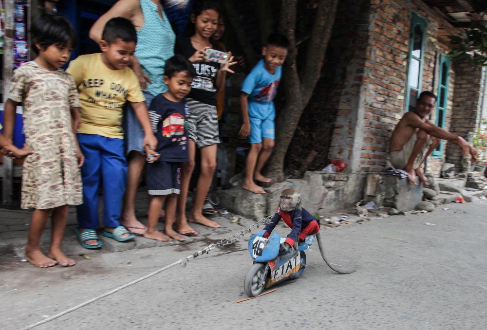 Macaco de moto infantil passa em frente de crianças na Indonésia