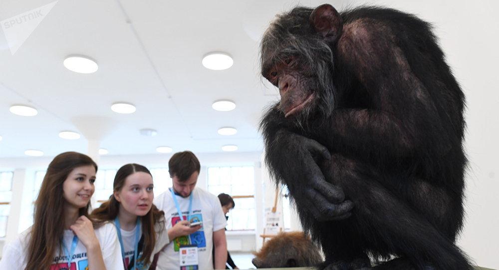 Reconstrução da espécie Homo naledi, mostrada na exposição O Dia do Elo Perdido: Homo naledi, em Moscou