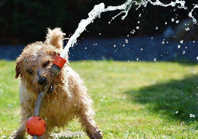 Cachorro com mangueira na boca