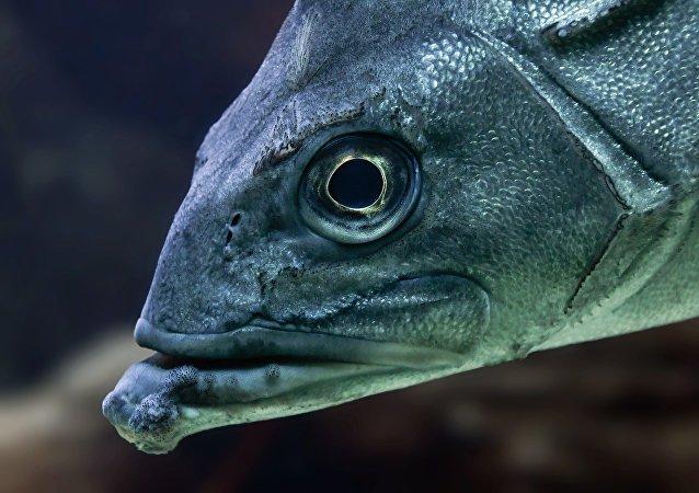 Segundo autoridades, cerca de 95% dos peixes sobrevivem à queda