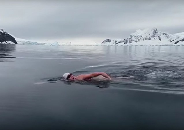 Nadadora ignora temperatura congelante e resolve dar um mergulho nas águas da Antártica
