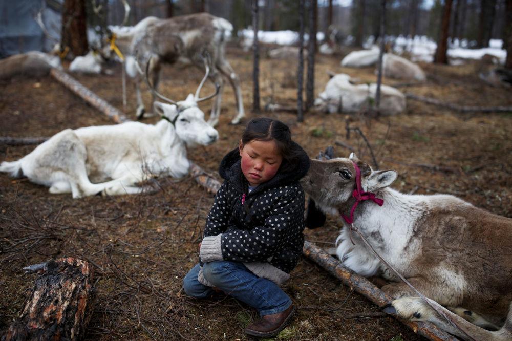 Menina mongol entre renas perto do povoado de Tsagaannuur, Mongólia