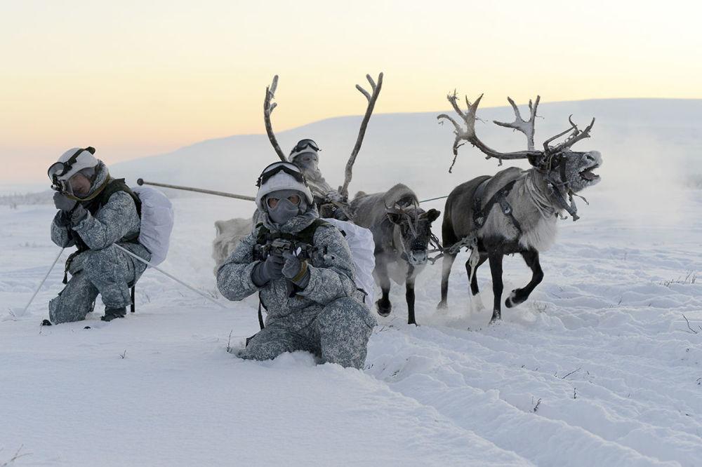 Tropas da Frota do Norte realizam exercícios com renas