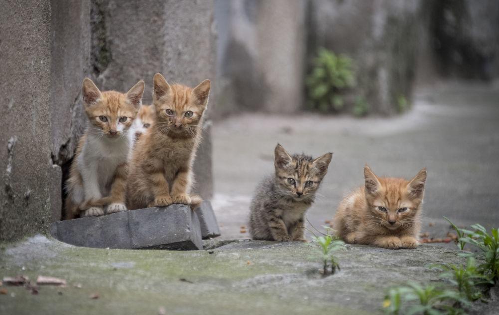 Cinco gatinhos em um bairro residencial de Xangai, na China
