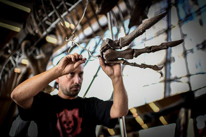 Especialista montando os ossos do dinossauro não identificado em Paris, 2 de junho de 2018