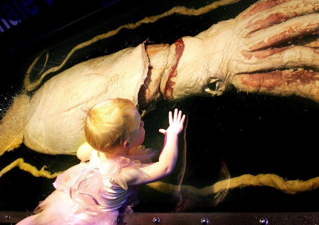 Menina de três anos olha para uma lula gigante em uma exposição em Melbourne, na Austrália