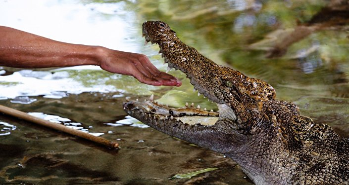 Homem estendendo a mão a crocodilo
