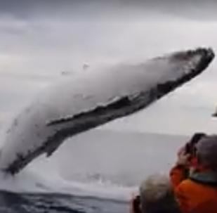 Baleia impressiona turistas