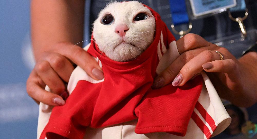 Gato Aquiles é vestido com uma camiseta da seleção da Rússia durante evento em São Petersburgo. Ele foi escolhido como o animal vidente da Copa do Mundo e tentará prever os resultados das partidas.