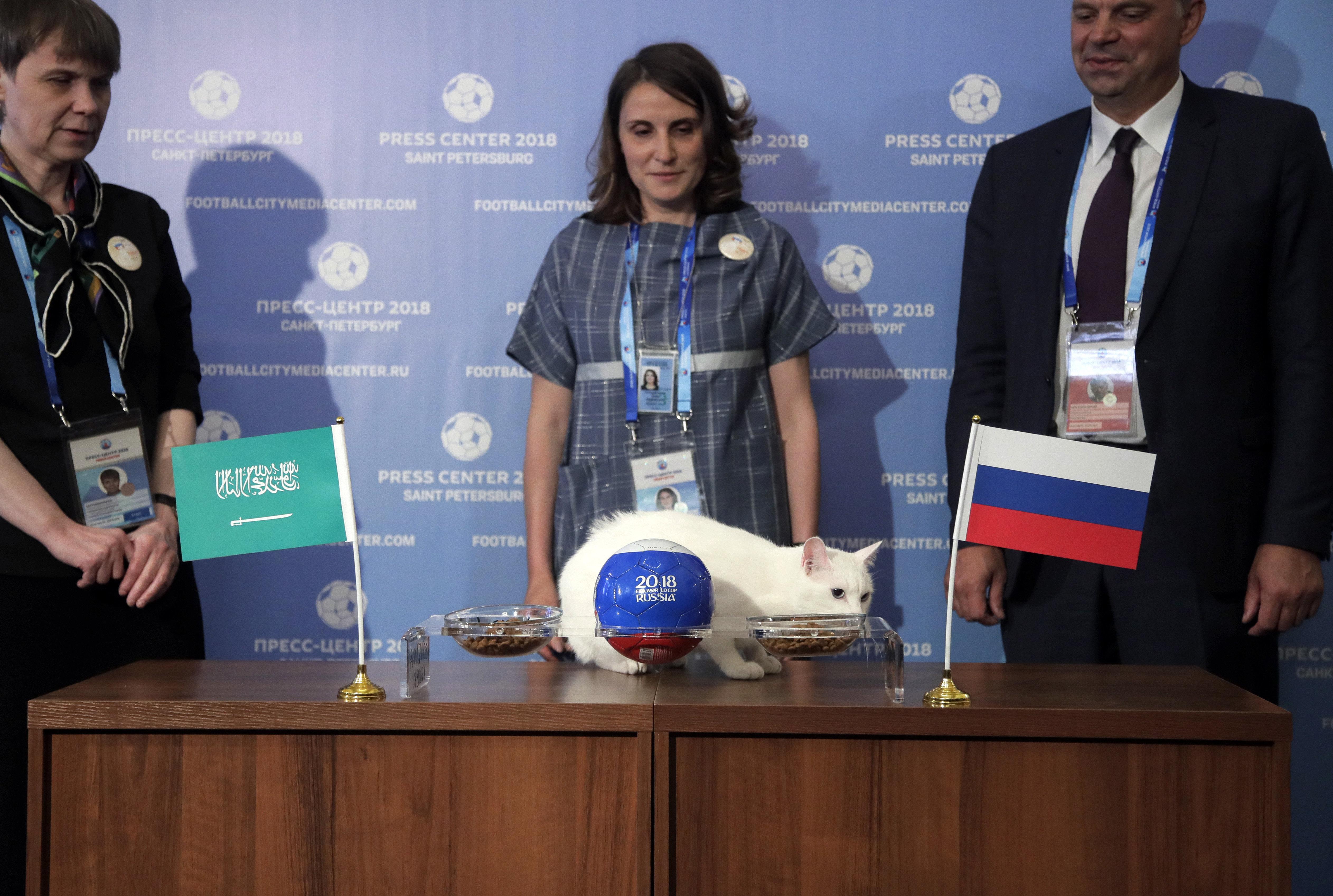 Gato Aquiles, o 'animal vidente' da Copa do Mundo, prevê a a vitória da Rússia na estreia do torneio. O evento para sua previsão foi realizado na cidade de São Petersburgo.