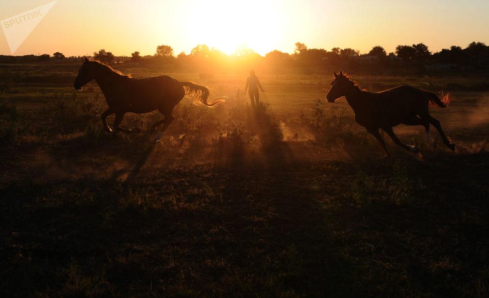 Cavalos na região russa de Rostov