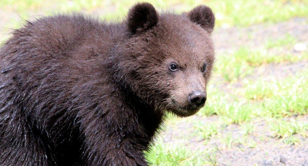 Urso (imagem referencional)