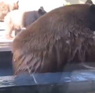 'Sai fora do meu quintal': cachorro assusta e manda embora família de ursos