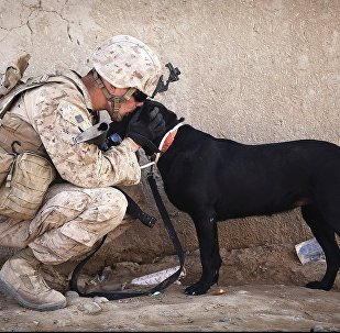 Cachorro com um militar (imagem referencial)
